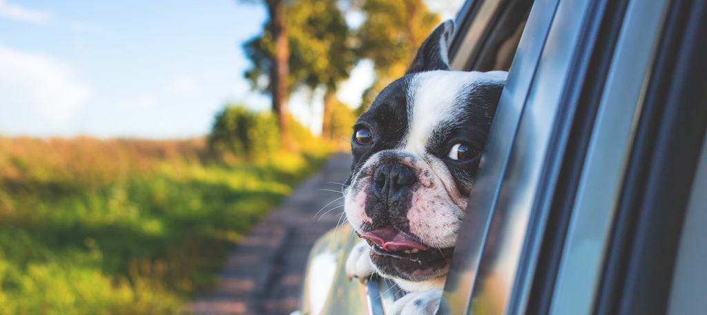 Dog-in-car-pexels-freestocksorg-134392